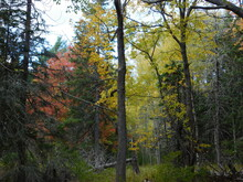 Landscape Photographs Of Coastal Maine - Fjords, Autumn Foliage, Mountains, And Forests Of Acadia National Park