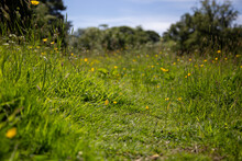 Natural Path Going Through A Wildflower And Grass Meadow.  With Trees In The Background