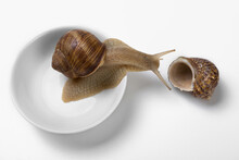 Snail Sits In A Round Gravy Boat, Neck Outstretched As If Looking At An Empty Shell, Concept, On White Background