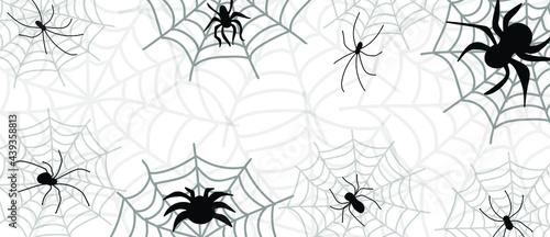 Fotografie, Obraz Spider and cobweb