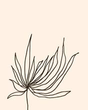 Minimal Botanical Drawing