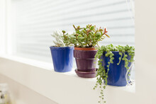 Potted Succulents In Window Sill