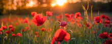 Spring Summer Green Meadow Field Panorama. Red Poppy Close-up Macro Panoramic Landscape View With Sunset Light. Inspirational Bright Calm Nature Flowers And Blurred Forest Trees, Artistic Beautiful