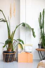 Potted Indoor Plants