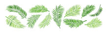 Palm Leaf Vector, Green Summer Branch Plant Jungle, Nature Set Icon Isolated On White Background. Tropic Illustration