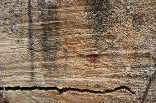 Textura madera