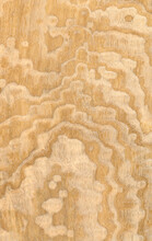 Macro Photo Of Wood Cross Section Wood Grain Texture Background