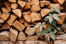 Neatly Folded Dry Wooden Sticks