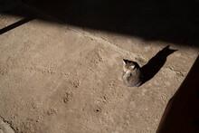 Cute, Little Kitten Outdoors