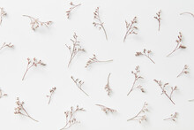 Dried Flowers On White Background