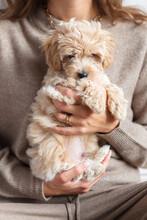 Happy Lovely Little Puppy