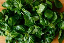 Heap Of Ripe Basil Leaves