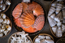 Sea Shells Displayed In Baskets, Top View