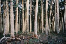 Forrest In Winter Sot On Film