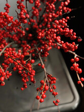 Still Life Branches With Small Red Berries As Decoration