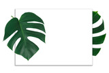Fresh green Monstera leaf on white background and white paper. Empty space for text.