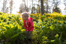 Little Girl Smells Flowers In The Wild