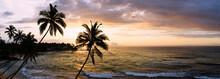 Sri Lanka Beach And Palm Trees Sunset