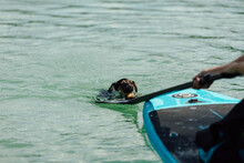 Dog Trying To Climb On The Paddle