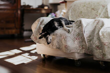 Dog Sleeping In A Funny Positions On Couch