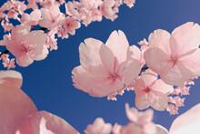 Illustration Of Cherry Blossom Against Blue Sky