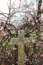 Shabby Cross On Grave Near Blooming Branches