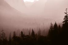 Foggy Forest In Mountainous Terrain In Morning