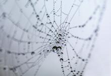 Macro Web Droplets