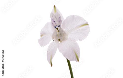 Billede på lærred perennial delphinium flower