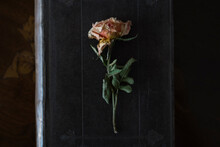 Dried Rose On Old Book Cover