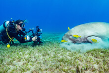 Photographer And Dugong