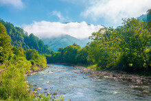 River In The Valley On A Misty Morning. Wonderful Summer Landscape In Mountains. Trees Along The Shore With Stones. Cloud On The Distant Hill. Sunny Weather