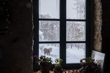 A Horse In The Snow Trough A Window