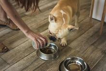 Adorable Dog Feeding Time