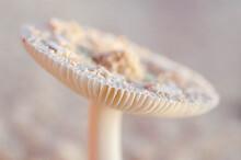 Mushroom On The Beach
