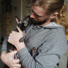 Cat With Unusual Eyes And Man In Grey Hoodie