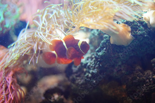 Billede på lærred fish tropical swimming beautiful background