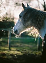 Backlit Grey Horse