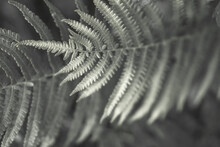 Fern Leaves Silhouettes. Art Photography For An Interior Poster. Natural Background In Deep Green Monochrome Colors