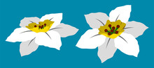 Daffodil Flower Vector Flat Isolated Colorful Illustration