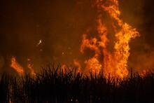 Pre-harvest Burning Sugarcane