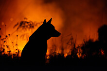 The Silhouette Of The Dog Is Burning Behind It
