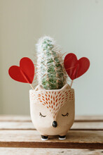 Cute Clay Planter With A Cactus