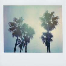 Palm Trees Vintage Polaroid