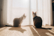 Two Tabby Cats At Home