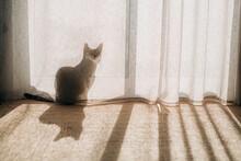 Cat Hiding Behind A Curtain