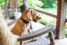 Puppy In A Rocking Chair