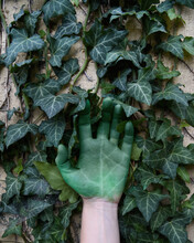 Green Ivy Hand Growing On Wall