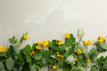 Celandine With Beautiful Yellow Flowers On Grey Table, Flat Lay. Space For Text