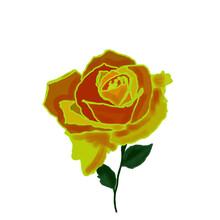 Rose, Floristry, Yellow Rose, Green Leaves, Botany, Landscape, Flowers, Flower